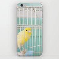 Yellow Bird Against Turq… iPhone & iPod Skin