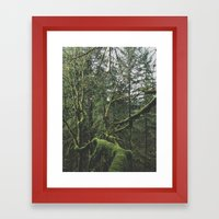 Moss Covered Trees Framed Art Print