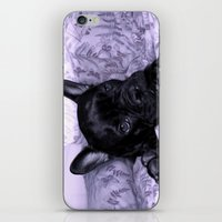 Purple Frenchie iPhone & iPod Skin
