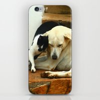 Like cats and dogs iPhone & iPod Skin