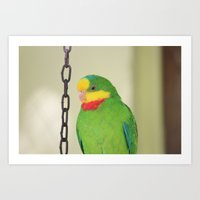 Chained Parrot Art Print