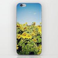sunflower fields iPhone & iPod Skin