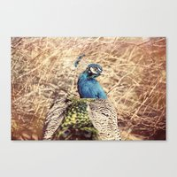 Peacock photography blue green brown photography branches immortality royalty Canvas Print