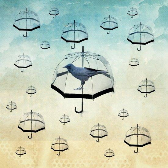 raven rain Canvas Print