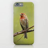 iPhone Cases featuring House Finch in the Rain by Christina Rollo