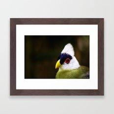 White Crested Turaco Framed Art Print