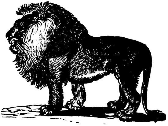 Vintage Lion Art Print