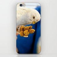 Blue Parakeet iPhone & iPod Skin