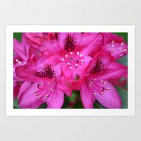 Flowers From Paradise Art Print