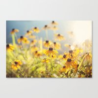 Summer Susans Canvas Print
