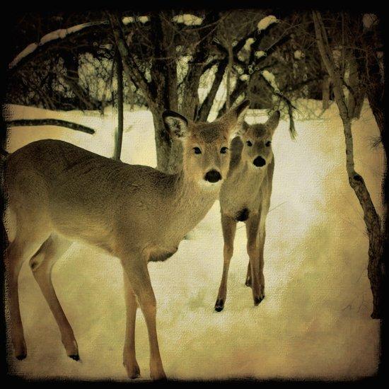 A Walk in the Woods Art Print