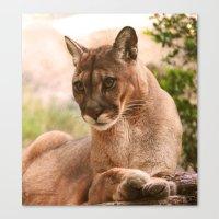 The Cougar Canvas Print