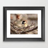Black-Capped Chickadee I… Framed Art Print
