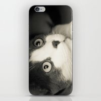What Do You Think Mr Cat… iPhone & iPod Skin