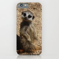 iPhone & iPod Case featuring Meerkat by SC Photography