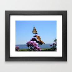 velvet butterflies Framed Art Print
