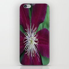 Beauty of Nature iPhone & iPod Skin