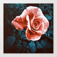 Filtered Rose Canvas Print