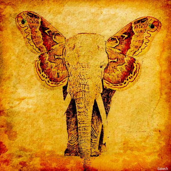 The elephant who wanted to be a butterfly Art Print