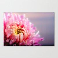 Pink Chrysanthemum Flower Canvas Print