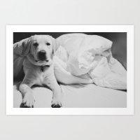 Sleepy Labrador Art Print