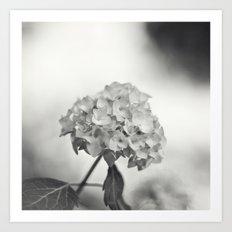 Hydrangea in Sepia Art Print