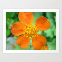 Orange Flower Photograph… Art Print