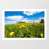 Dandelion field Art Print