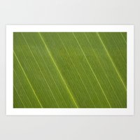 Palm Tree Leaf Art Print