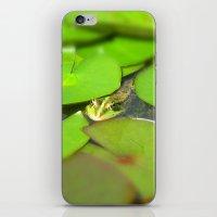 green frog I iPhone & iPod Skin