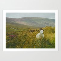 I see ewe on the Sally Gap Art Print