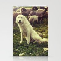 Herding dog, female, south of Israel, scaned sx-70 Polaroid Stationery Cards