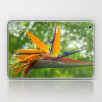 BIRD OF PARADISE FLOWER Laptop & iPad Skin