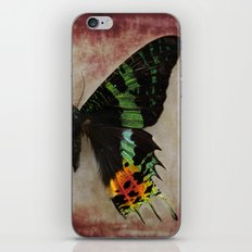 Sunset Moth Wing iPhone & iPod Skin