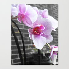 Pink; orchid Canvas Print