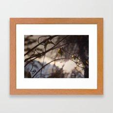 Sunshine Smile II Framed Art Print