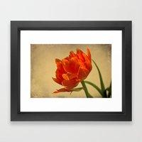 Orange Tulips Framed Art Print