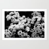 Flora 1 / Black & white series Art Print