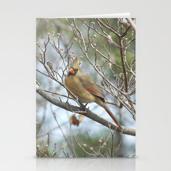 Lady Cardinal Stationery Card