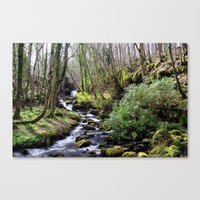 Downhill Forest Canvas Print
