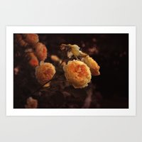 The Golden Rose Art Print