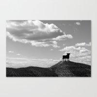 Osborne bull Canvas Print