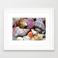 Pastel Shells Framed Art Print