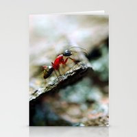 Ant Insect Photography, Nature, Macro, Home Decor Stationery Cards