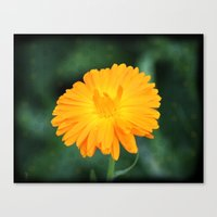 The Sunset Flower Canvas Print