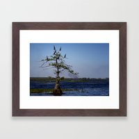 Cormorant Tree Framed Art Print