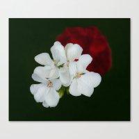 Geranium as art Canvas Print