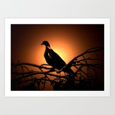 Dove in the shade Art Print