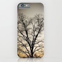 iPhone & iPod Case featuring Tree by Aaron Mallory