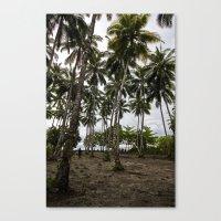 Palm Plantation Canvas Print